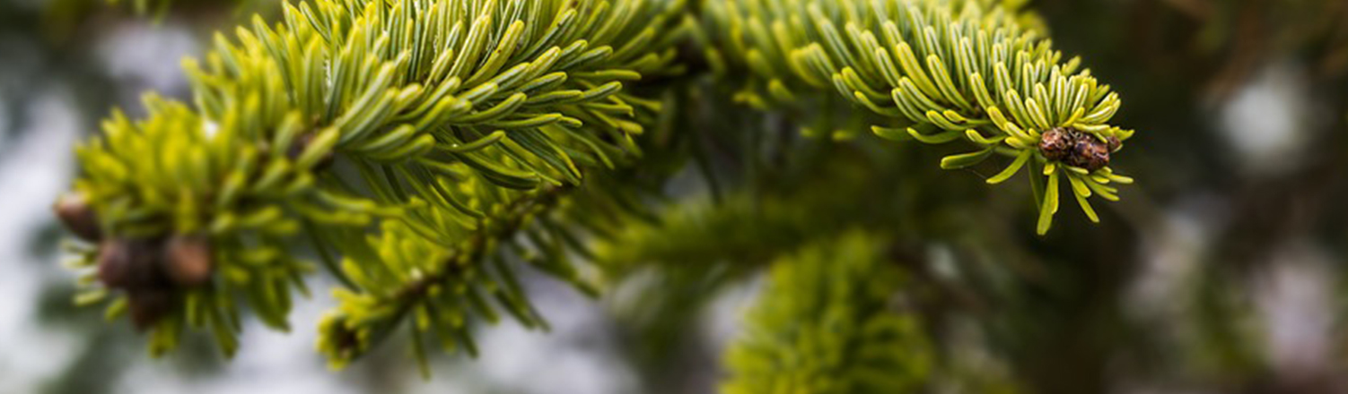 Tannenbaum Wegwerfen.Darf Der Weihnachtsbaum Im Ofen Verheizt Werden