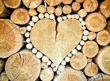 Keine Wissenschaft: Wie Sie Brennholz richtig lagern