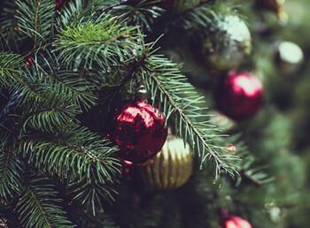Darf der Weihnachtsbaum im Ofen verheizt werden?