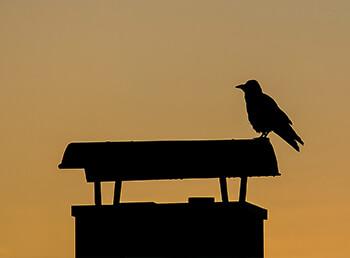 Vogel im Schornstein? Was Sie tun können!