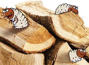 Was tun gegen Holzwürmer im Brennholz?