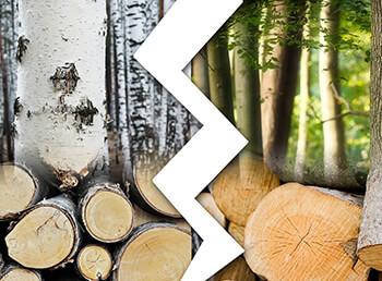 Was ist das beste Brennholz: Birke oder Buche?